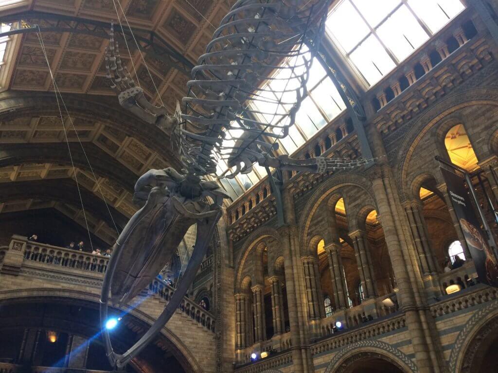 Londyn, weekend, zwiedzanie, miasto, stolica, Wielka Brytania, turysta, muzeum, wieloryb, szkielet, historia, obiekt