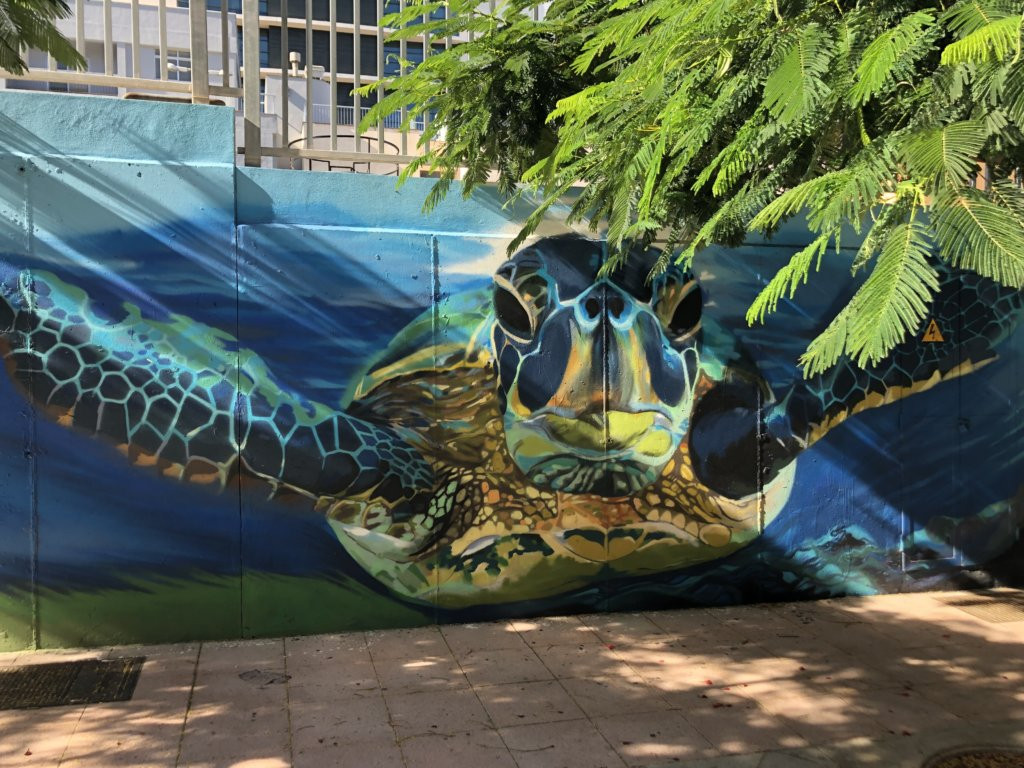 mural, żółw, kolory, ściana, street art, kanary, stolica, miasto