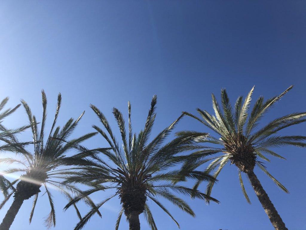 palmy, niebo, kanary