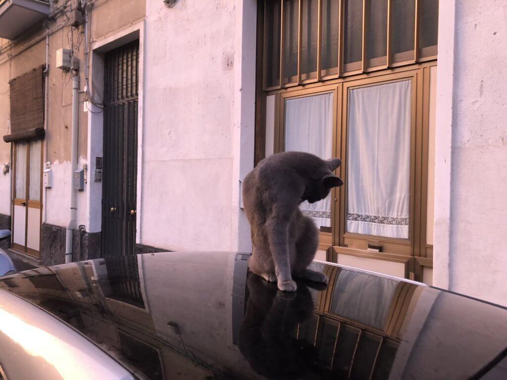Kot zażywający kąpieli na samochodzie