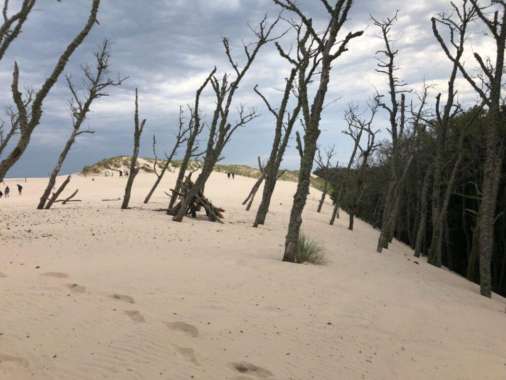 martwy las