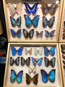 motyle - muzeum motyli